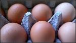 feb5_eggs